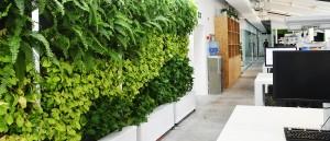 Shanghai Green Wall