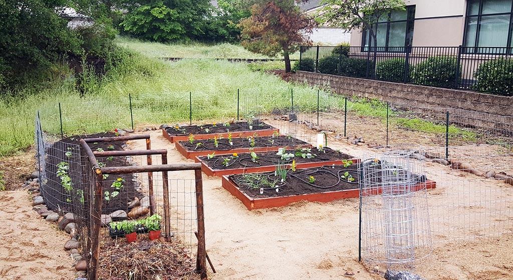 garden finished